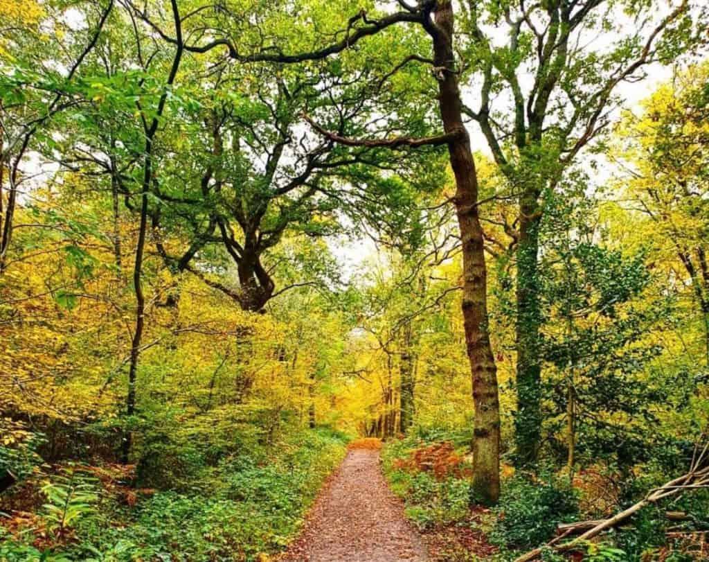 Ruislip Woods Harrow